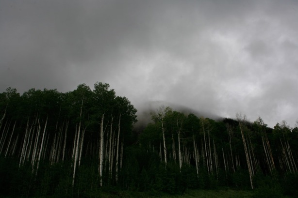 Tall Aspens near the ski towns
