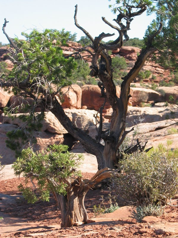 Deadhorse Point next to edge of mesa