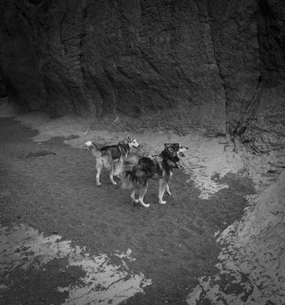 Wolfs in canyon